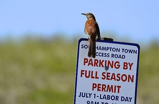 Can I park here? by Lorelei Galardi