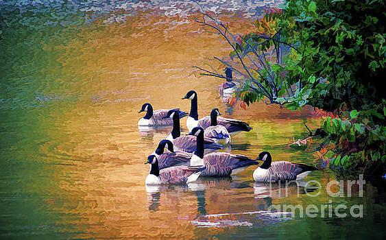 Canada Geese - Autumn at Pandapas Pond by Kerri Farley