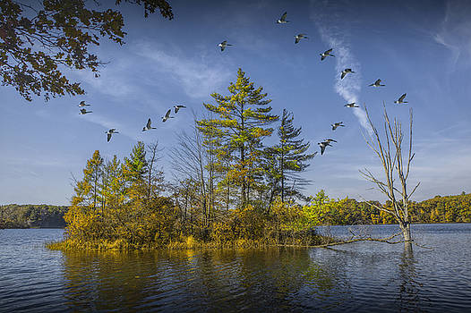 Randall Nyhof - Canada Geese flying by a Small Island on Hall Lake