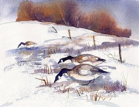 Peggy Wilson - Canada Geese in Stubble Field II
