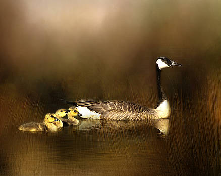 Canada Goose and Goslings by TnBackroadsPhotos
