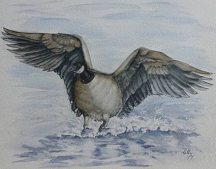 Canada Goose by Kelly Mills