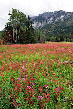 Canada Meadow by Catherine Alfidi