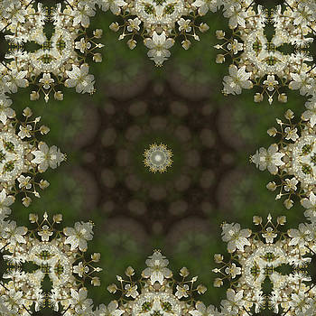 Valerie Kirkwood - Canada Plum Kaleidoscope 2