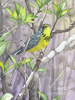 Canada Warbler 2 by Steve Hamlin