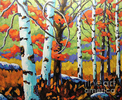 Canadian Birch Woods by Richard T Pranke