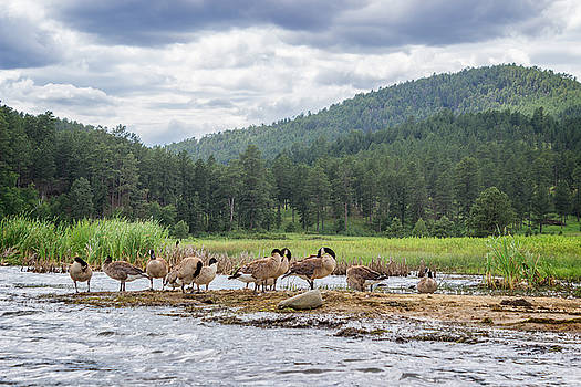 Ray Van Gundy - Canadian Geese at Sheridan Lake