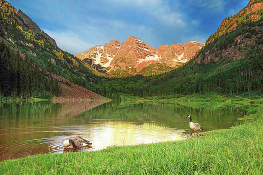 Canadian Geese by Early Morning at Maroon Bells by Eneida Gastal-Keith