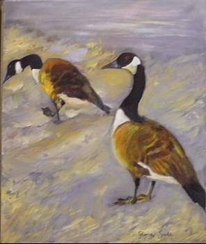 Canadian geese by Gloria Smith