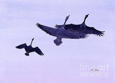 Canadian Geese by Laurel Best