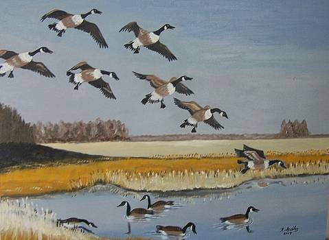 Canadian Geese by Robert E Gebler