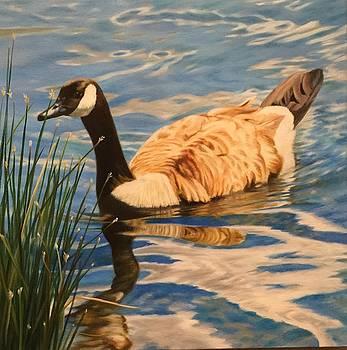 Canadian Goose by Deborah Plath