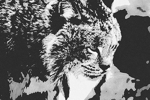 Canadian Lynx 2 by Alicia Zimmerman