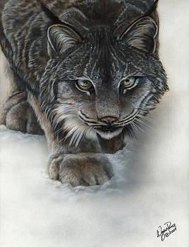 Canadian Lynx by Wayne Pruse