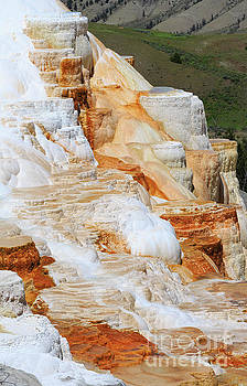 Canary Spring Mammoth Hot Springs Upper Terraces by Louise Heusinkveld