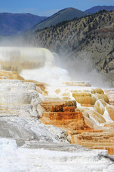 Canary Spring, Mammoth Hot Springs, Upper Terraces, Yellowstone  by Louise Heusinkveld