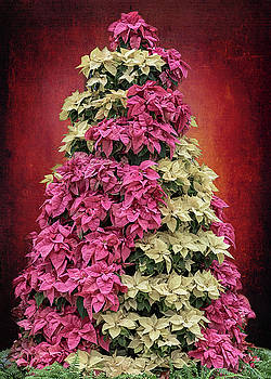 Susan Rissi Tregoning - Candy Striped Poinsettia Tree