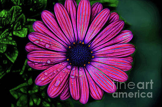 Candy Stripes by Diana Mary Sharpton