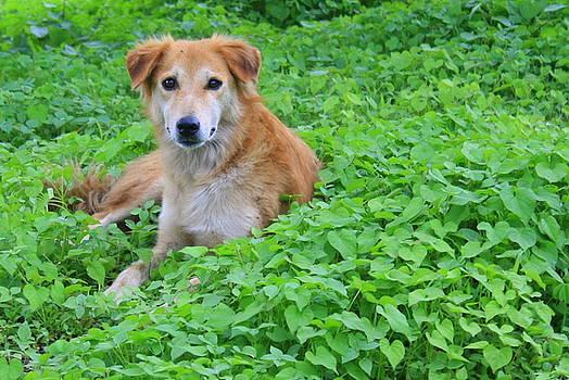 Canine Heart by Vishakha Bhagat