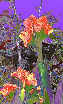 Canna Abstract 6 by M Diane Bonaparte