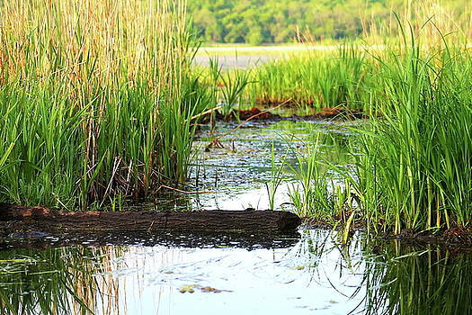 Canoeing through the Cattails 2 by Bethany Benike