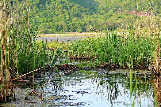 Canoeing through the Cattails by Bethany Benike