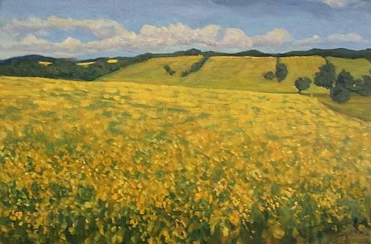 Canola fields by Liliane Fournier