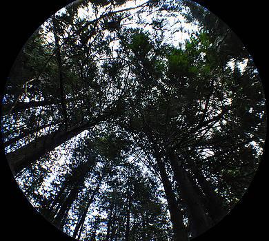 Clayton Bruster - Canopy