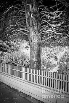 Canopy Tree by Craig J Satterlee
