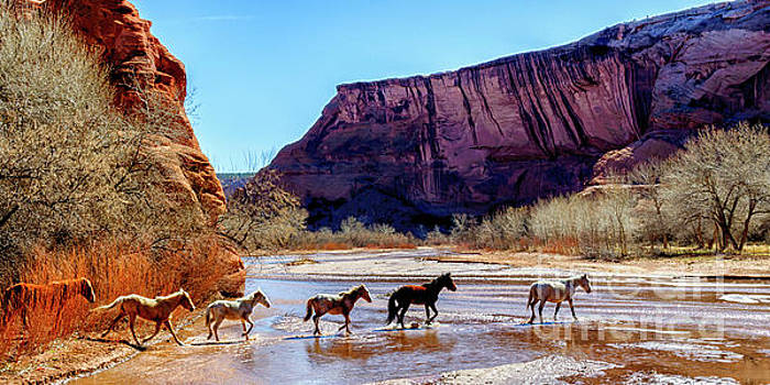 Canyon de Chelly National Monument by Thomas R Fletcher