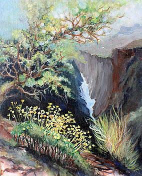 Canyon Land by Linda Shackelford