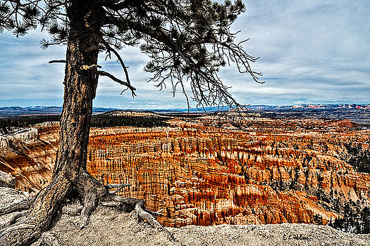Christopher Holmes - Canyon Overlook