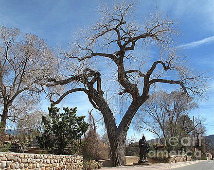 Canyon Road Tree Spring by Mary Kobet