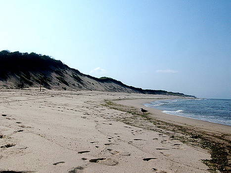 Cape Cod 1 by Maria Mills