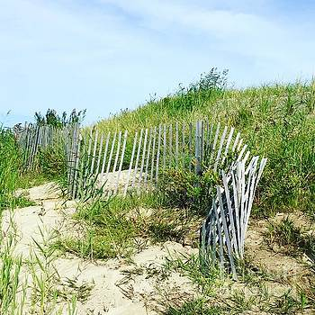 Cape Cod by Beth Saffer