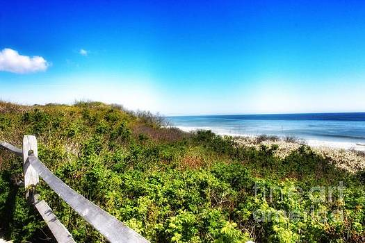 Cape cod in summer by Hilary England