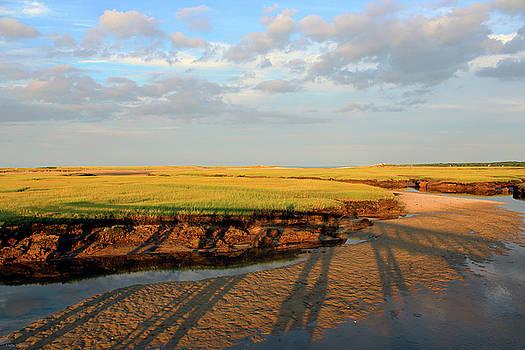 Cape Cod Marsh by Linda Sannuti