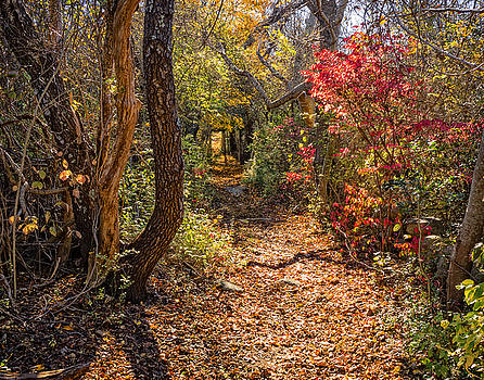 Cape Cod Path by Frank Winters