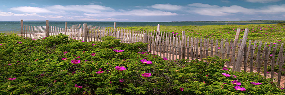 Cape Cod Stroll by Mikes Nature