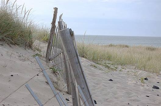 Cape Dune Fence by Shaileen Landsberg