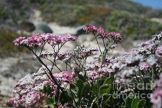 Cape Floral Kingdom  by Tatyana Binovska