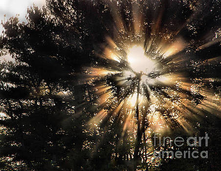 Sandra Huston - Capturing The Light