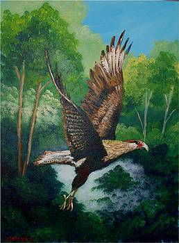 Caracara bird by Jean Pierre Bergoeing