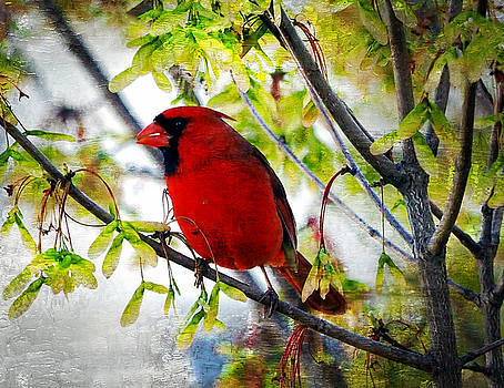 Cardinal 1 by Scott Fracasso