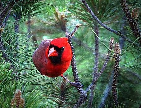 Cardinal 2 by Scott Fracasso