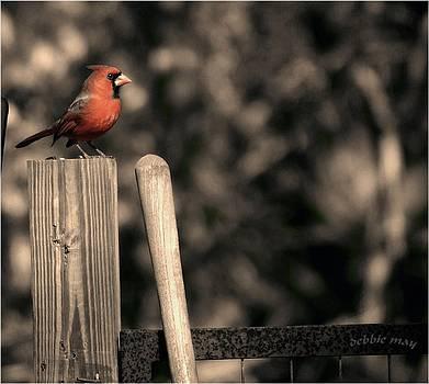 Cardinal at his Post by Debbie May