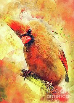 Cardinal bird by Justyna JBJart