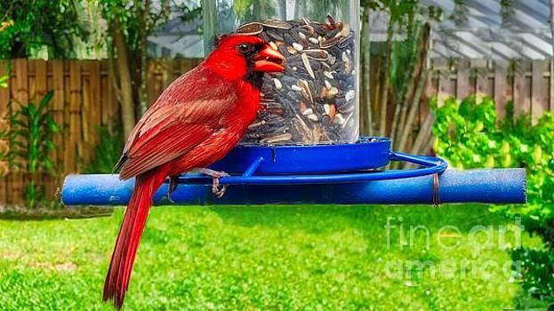 Cardinal Bird by Larry Mulvehill
