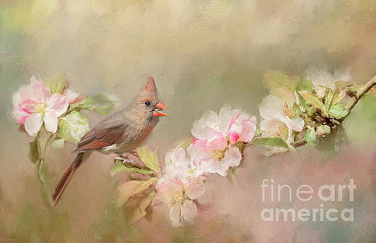 Cardinal Delight by Pam  Holdsworth