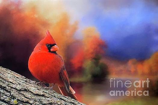 Cardinal in Autumn by Janette Boyd